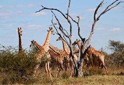 Marco Polo Reisen - Namibia - Botswana: Wüste, Wasser, Wildlife