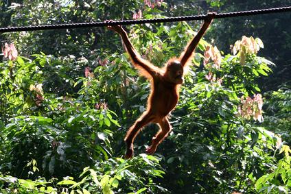 Wikinger Reisen - Naturparadies Borneo - vom Dschungel zum Mount Kinabalu