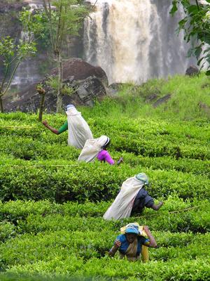 Studiosus - Sri Lanka