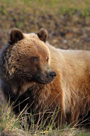 Wikinger Reisen - Aktiv im Land der Gletscher & Grizzlys