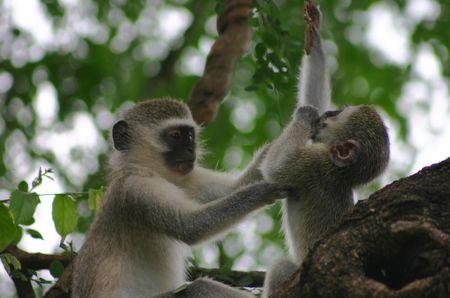 Thomas Cook - Bush & Beach: Krüger Nationalpark & White Pearl Resort, Mozambique