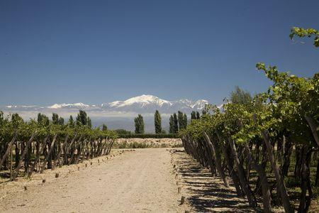 Wikinger Reisen - Typisch Chile: Wandern, Wein & Gaumenschmaus