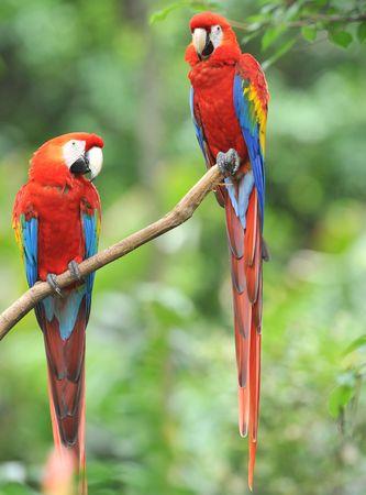 Marco Polo Reisen - Costa Rica - Vulkane, Dschungel, Kaffeeduft