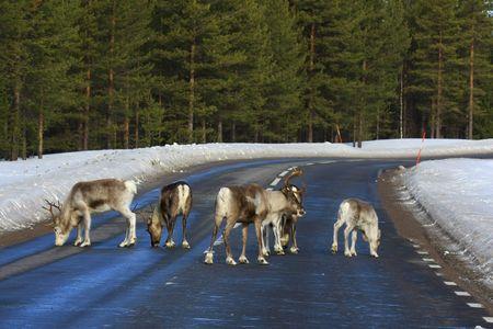 Marco Polo Young Line Travel - Finnland - Auf der Rentierroute im eisigen Norden