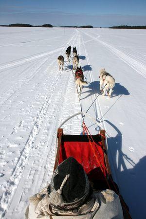 Wikinger Reisen - Huskysafari durch die Wildnis Schwedens