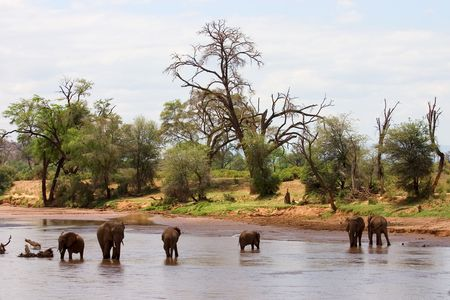 Thomas Cook - Große Kenia Safari