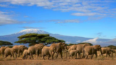 Thomas Cook - A-la-carte-Safari Tansania