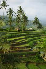 Meiers Weltreisen - Faszination Bali & einzigartiges Ostjava