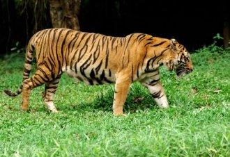 airtours - Majest�tische Katzen Rajasthans