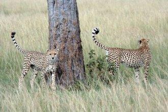 Jahn Reisen - Masai Mara Compact