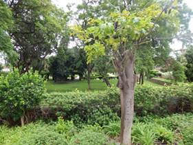Windhoek Park
