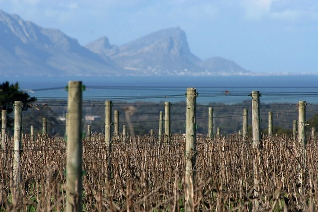 Weingarten Südafrika
